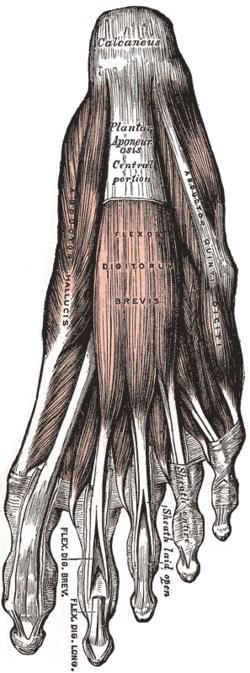 Hat begonnen, der Kern auf dem Bein des Daumens zu wachsen