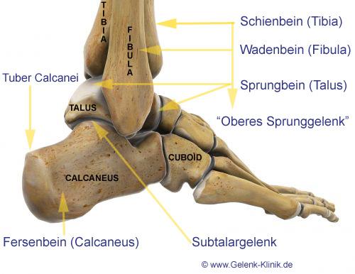 Oberes Sprunggelenk (Articulatio talocruralis)    Med-koM