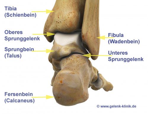 Fuß – Rückfußerkrankungen