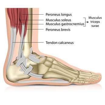 Schmerzen über dem knöchel | Bänderdehnung am Knöchel