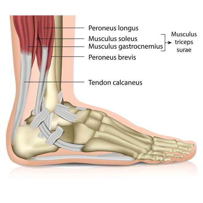 Fußschmerzen und Fersenschmerzen: Was kann ich tun? | Gelenk-doktor.de